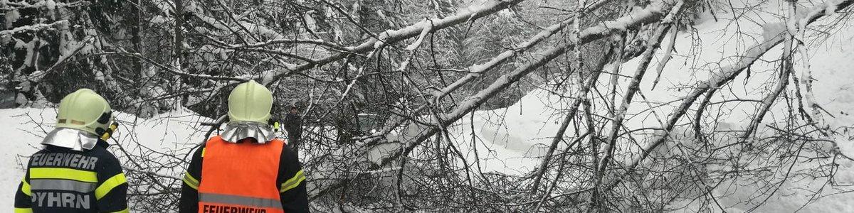 Umgestürzte Bäume am Pyhrnpass