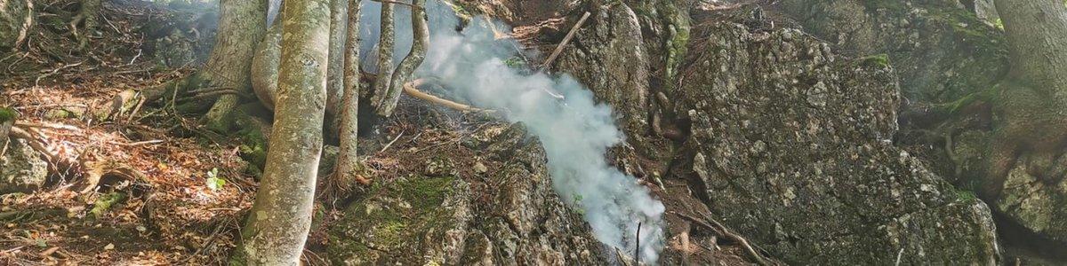 Brennender Baum nach Blitzschlag